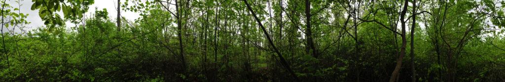 Spring 2016 360 photo single tree selection